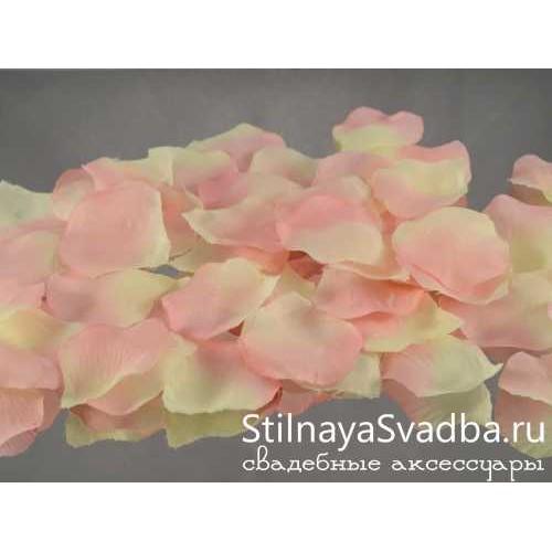 Фото. Лепестки роз, айвори-роза