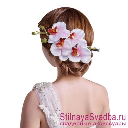 Ветка орхидеи  бело-розовая фото