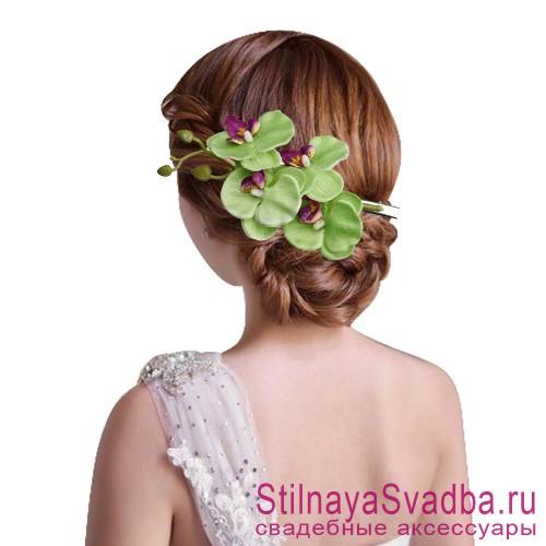 Ветка орхидеи  салатовая фото